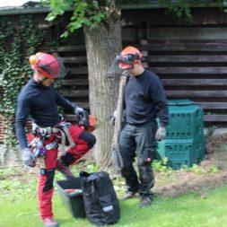 baumfaeller111 - Der Baum muss weg – Kletterer am Werk