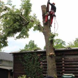 baumfaeller151 - Der Baum muss weg – Kletterer am Werk