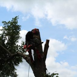 baumfaeller161 - Der Baum muss weg – Kletterer am Werk