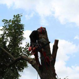 baumfaeller171 - Der Baum muss weg – Kletterer am Werk