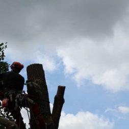baumfaeller181 - Der Baum muss weg – Kletterer am Werk