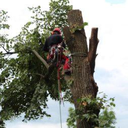 baumfaeller191 - Der Baum muss weg – Kletterer am Werk