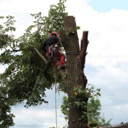 baumfaeller201 - Der Baum muss weg – Kletterer am Werk