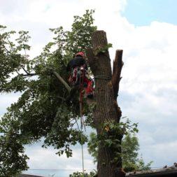 baumfaeller211 - Der Baum muss weg – Kletterer am Werk