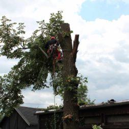 baumfaeller221 - Der Baum muss weg – Kletterer am Werk