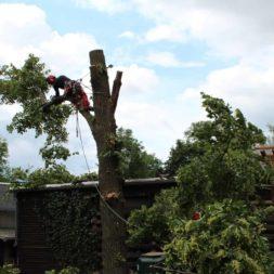 baumfaeller231 - Der Baum muss weg – Kletterer am Werk