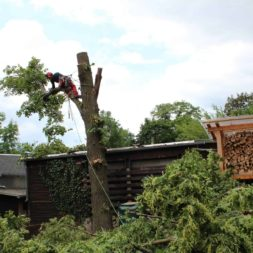 baumfaeller241 - Der Baum muss weg – Kletterer am Werk