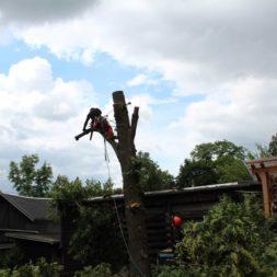baumfaeller251 - Der Baum muss weg – Kletterer am Werk