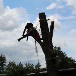baumfaeller261 - Der Baum muss weg – Kletterer am Werk