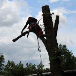 baumfaeller271 - Der Baum muss weg – Kletterer am Werk