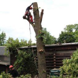 baumfaeller281 - Der Baum muss weg – Kletterer am Werk