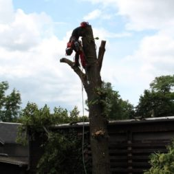 baumfaeller291 - Der Baum muss weg – Kletterer am Werk