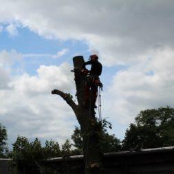 baumfaeller301 - Der Baum muss weg – Kletterer am Werk