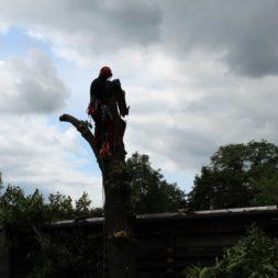 baumfaeller312 - Der Baum muss weg – Kletterer am Werk
