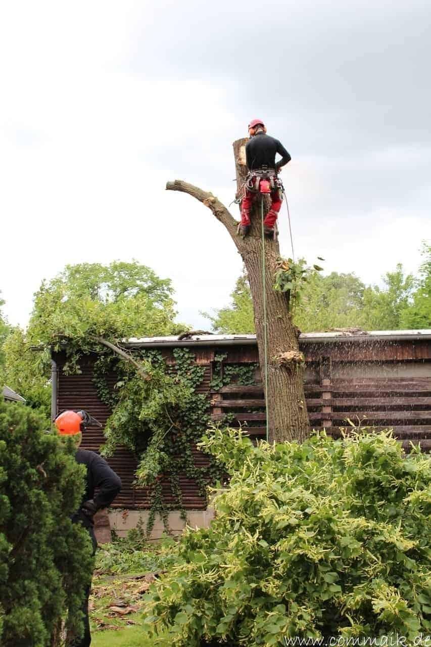 baumfaeller321 - Der Baum muss weg – Kletterer am Werk