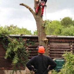 baumfaeller331 - Der Baum muss weg – Kletterer am Werk