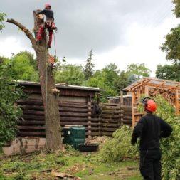 baumfaeller341 - Der Baum muss weg – Kletterer am Werk
