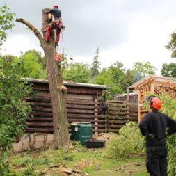 baumfaeller351 - Der Baum muss weg – Kletterer am Werk