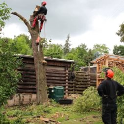 baumfaeller361 - Der Baum muss weg – Kletterer am Werk