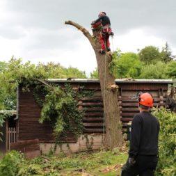 baumfaeller371 - Der Baum muss weg – Kletterer am Werk