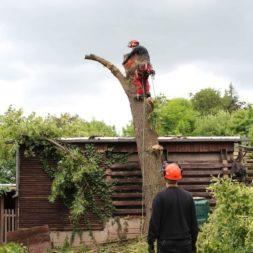 baumfaeller381 - Der Baum muss weg – Kletterer am Werk