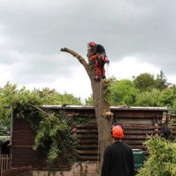baumfaeller401 - Der Baum muss weg – Kletterer am Werk