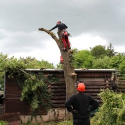 baumfaeller411 - Der Baum muss weg – Kletterer am Werk