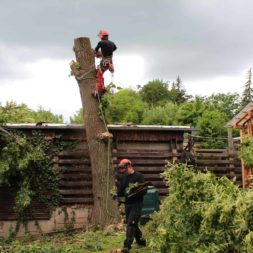 baumfaeller421 - Der Baum muss weg – Kletterer am Werk