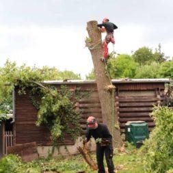 baumfaeller431 - Der Baum muss weg – Kletterer am Werk