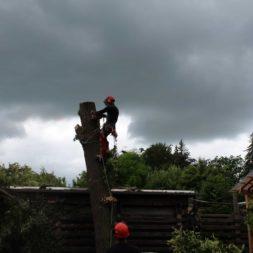 baumfaeller441 - Der Baum muss weg – Kletterer am Werk