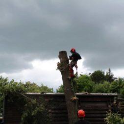 baumfaeller451 - Der Baum muss weg – Kletterer am Werk