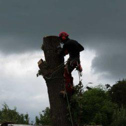 baumfaeller461 - Der Baum muss weg – Kletterer am Werk