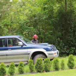 baumfaeller481 - Der Baum muss weg – Kletterer am Werk