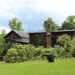 baumfaeller511 - Der Baum muss weg – Kletterer am Werk