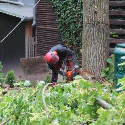 baumfaeller541 - Der Baum muss weg – Kletterer am Werk