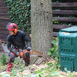 baumfaeller551 - Der Baum muss weg – Kletterer am Werk