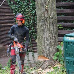 baumfaeller561 - Der Baum muss weg – Kletterer am Werk