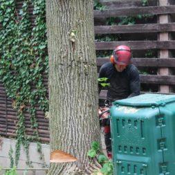 baumfaeller571 - Der Baum muss weg – Kletterer am Werk