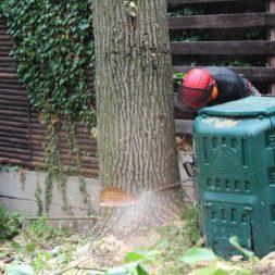 baumfaeller59 - Der Baum muss weg – Kletterer am Werk