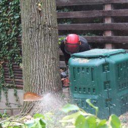 baumfaeller611 - Der Baum muss weg – Kletterer am Werk