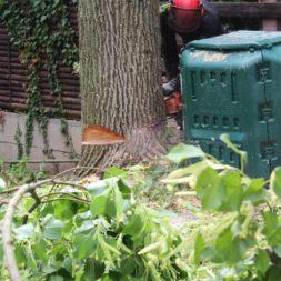 baumfaeller62 - Der Baum muss weg – Kletterer am Werk