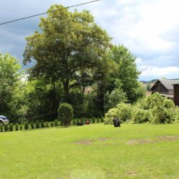 baumfaeller63 - Der Baum muss weg – Kletterer am Werk