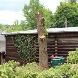 baumfaeller67 - Der Baum muss weg – Kletterer am Werk