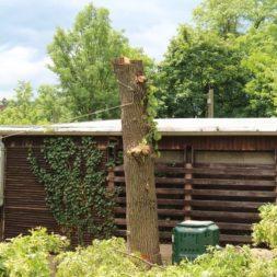 baumfaeller68 - Der Baum muss weg – Kletterer am Werk