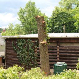 baumfaeller69 - Der Baum muss weg – Kletterer am Werk