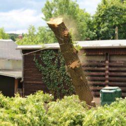baumfaeller70 - Der Baum muss weg – Kletterer am Werk