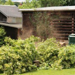 baumfaeller71 - Der Baum muss weg – Kletterer am Werk