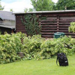 baumfaeller72 - Der Baum muss weg – Kletterer am Werk