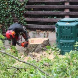 baumfaeller73 - Der Baum muss weg – Kletterer am Werk