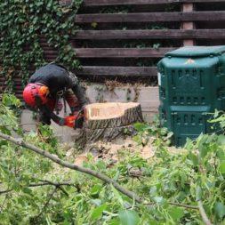 baumfaeller74 - Der Baum muss weg – Kletterer am Werk